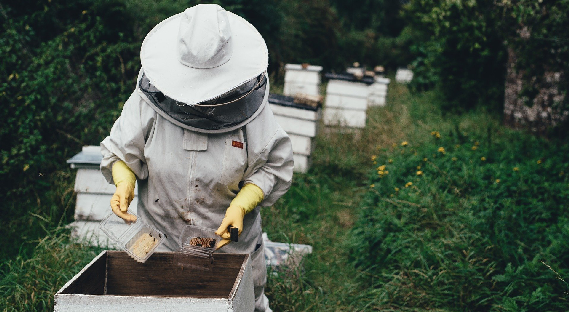 abeilles, varoa