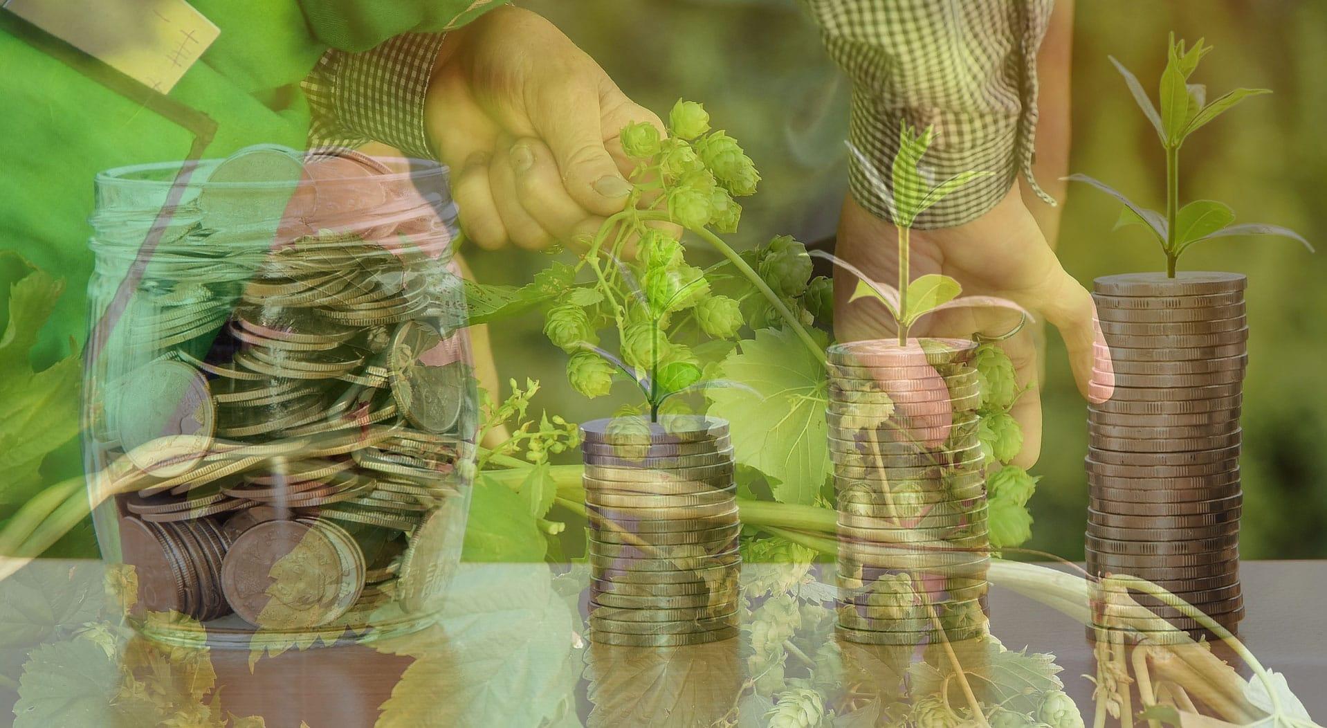 rentabilité  houblonnière